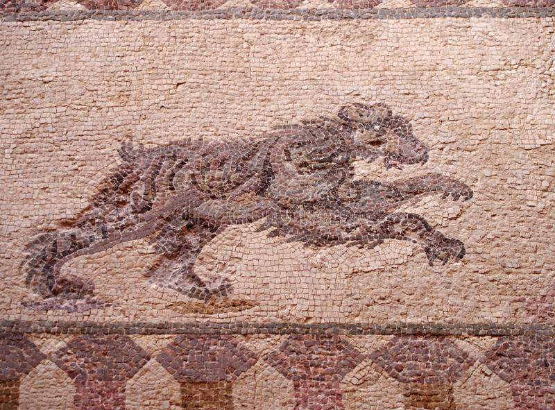 detail of an ancient roman floor mosaic with the image of a hunting bear from the archeological ruins known as the house of stock images