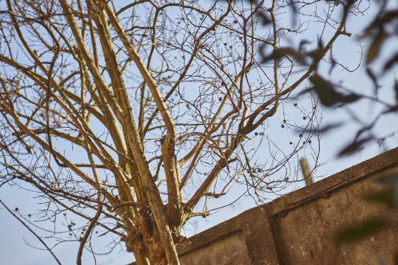 Bare branches. Detail of the bare branches of a shrub in the winter season royalty free stock photography