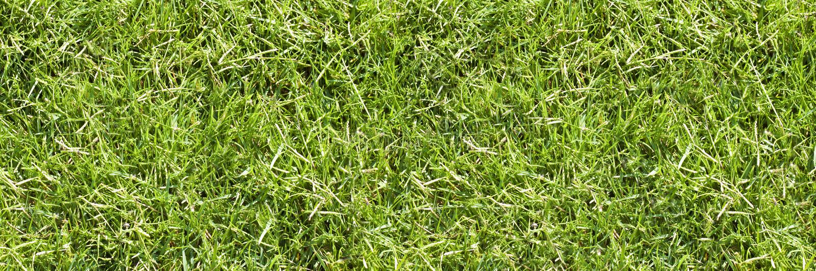 Detail of a beautiful green mowed lawn stock photos