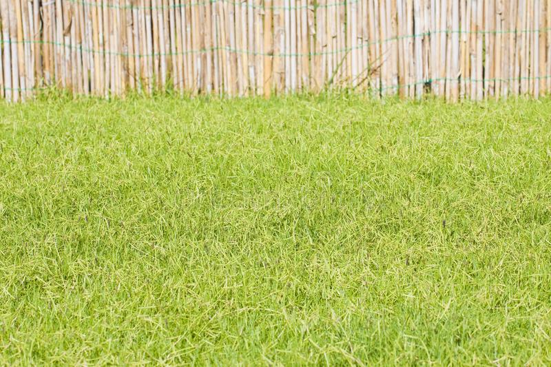 Detail of a beautiful green mowed lawn with lathwork royalty free stock photography