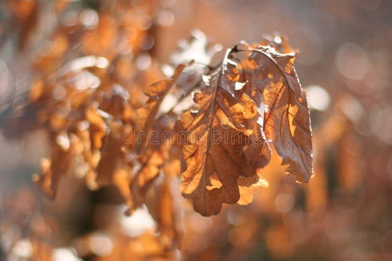 Detail-Blätter auf einem Baum im Herbst stockfoto