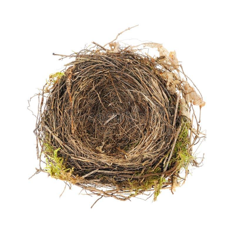 Detail of blackbird nest isolated stock images