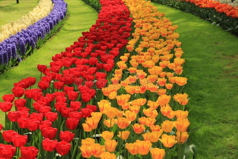 Detail, bloeiende tulpen en hyacinten in bloemtuin Keukenhof in de lente royalty-vrije stock afbeeldingen