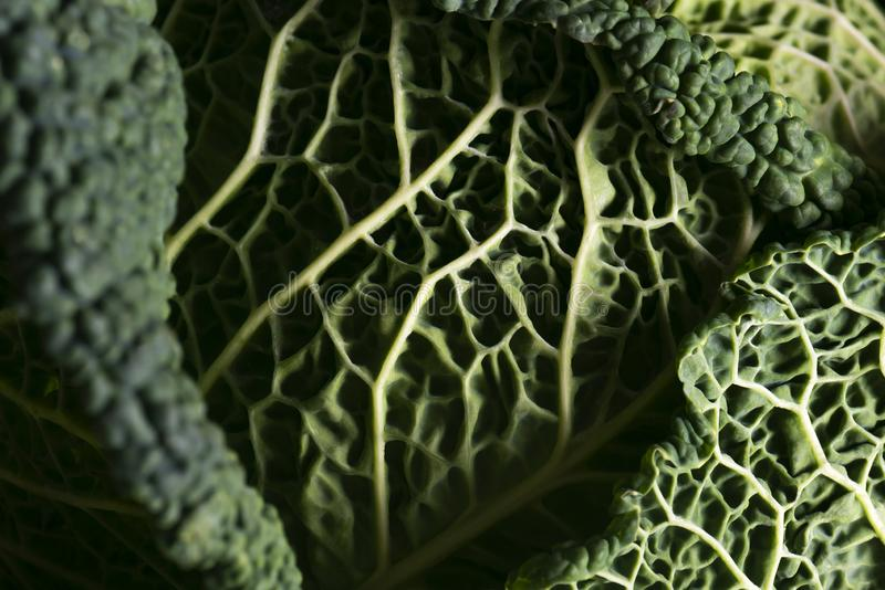 Detail of cabbage leaves stock photo
