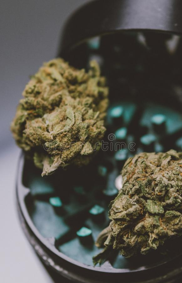 Detail of cannabis buds KUSH on glass background - medical marijuana dispensary concept. Social insta size for stories stock photography