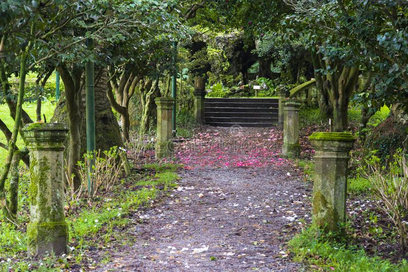 Detail of a classic garden in in Pontevedra Spain. Detail of a classic garden in Lourizan with camellia trees, Pontevedra Spain stock photography