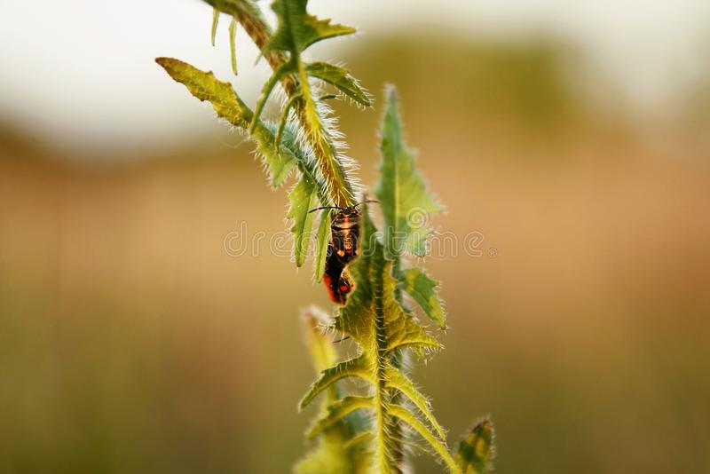 Download Detail of colored beetle stock photo. Image of colored - 118241254