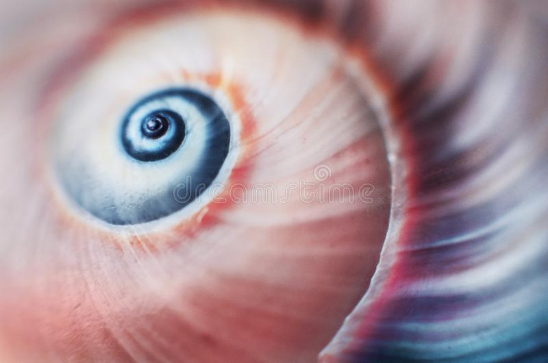 Detail of colorful shell stock photography