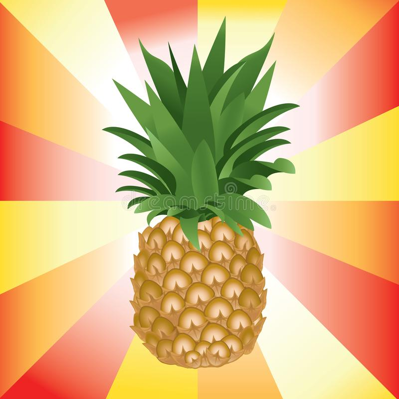 Detail colorful vector illustration of ripe pineapple royalty free stock images