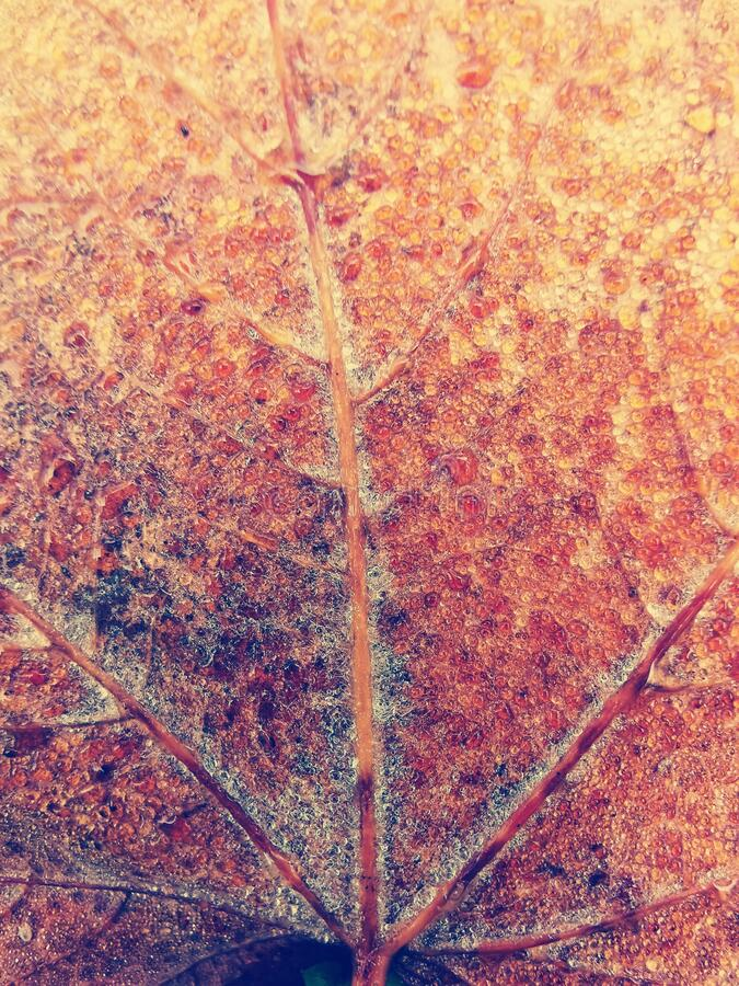 Detail of colorfull leaf. Nature on autumn stock image