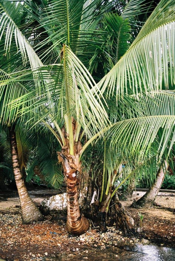 Detail dat van palmtrees in Panama wordt geschoten stock foto's