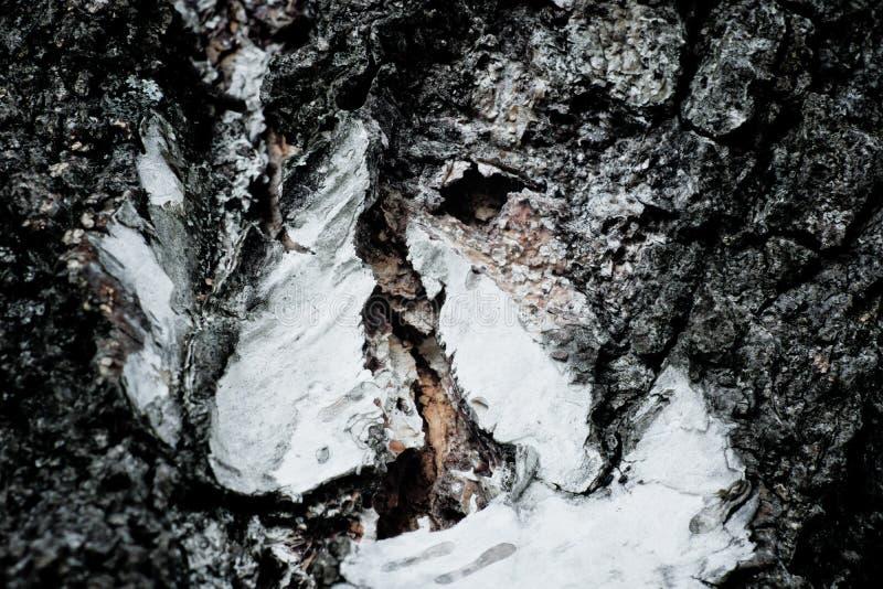 Detail der Barke lizenzfreies stockfoto