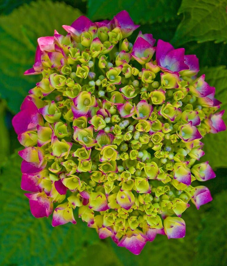Detail der Blume lizenzfreies stockfoto