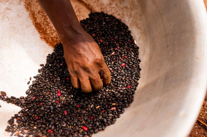 Detail der dünnen afrikanischen Frauenhand, die schwarze Bohnen im Topf beim Arbeiten im Bauernhof in der Landschaft hält lizenzfreie stockbilder