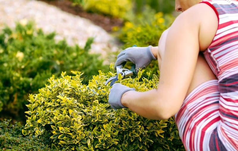 Detail der Frauenhandgartenarbeit lizenzfreies stockbild