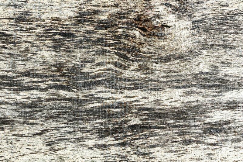 Detail der strukturierten Planke der alten Ulme stockfoto