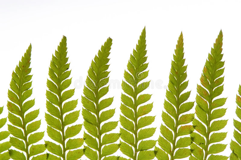 Detail des grünen Farns stockfotos