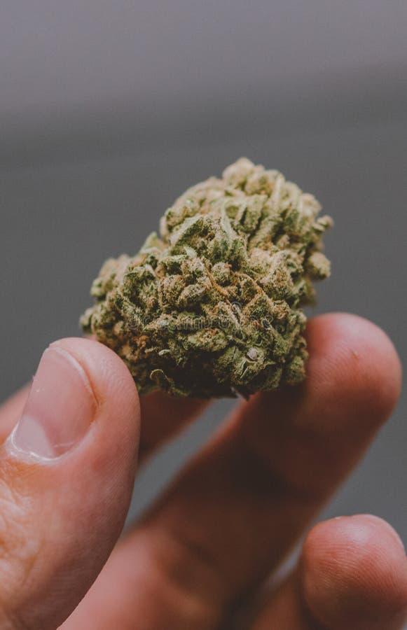 Detail des Hanfs knospt KUSH auf Glashintergrund - medizinisches Marihuanaapothekenkonzept Sozial-insta Größe für Geschichten stockfotos