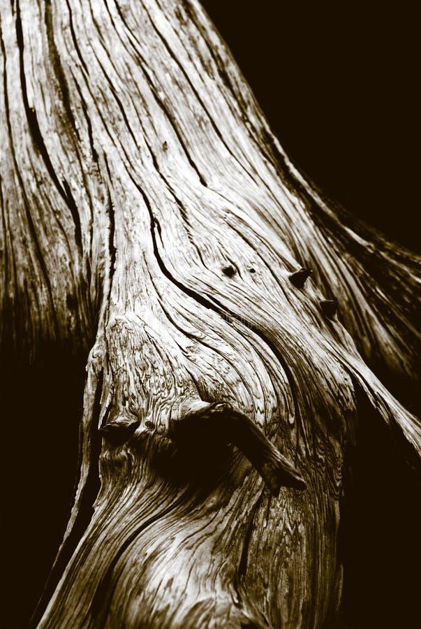 Detail des körnigen Baums lizenzfreies stockbild