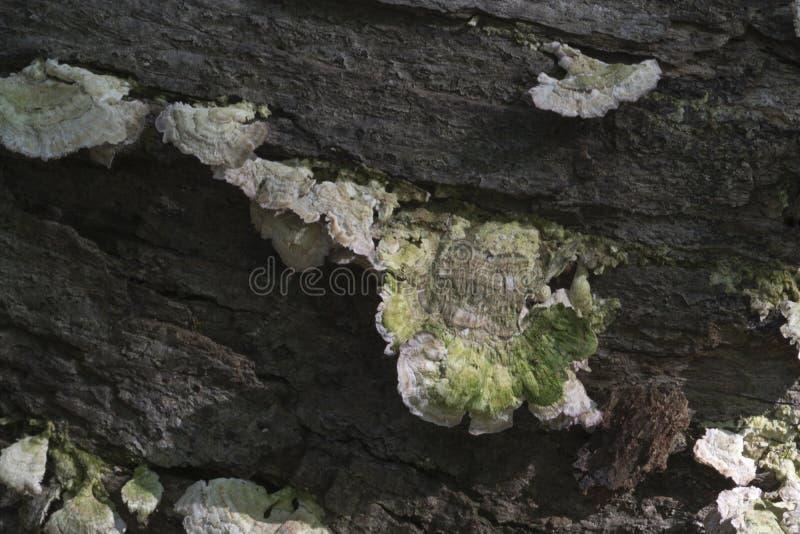 Detail des Pilzes auf Klotz lizenzfreies stockbild
