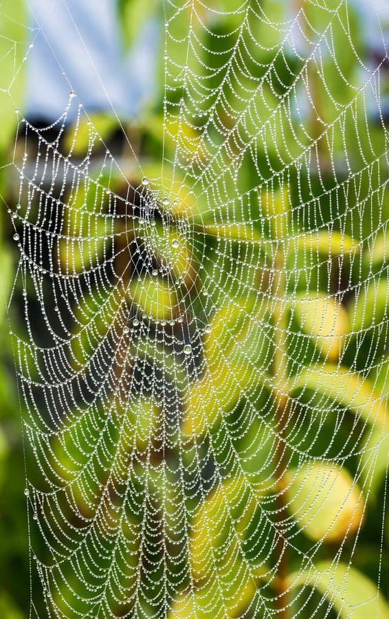 Detail des taunassen Spinnennetzes mit Perlen von den Regentropfen stockbild