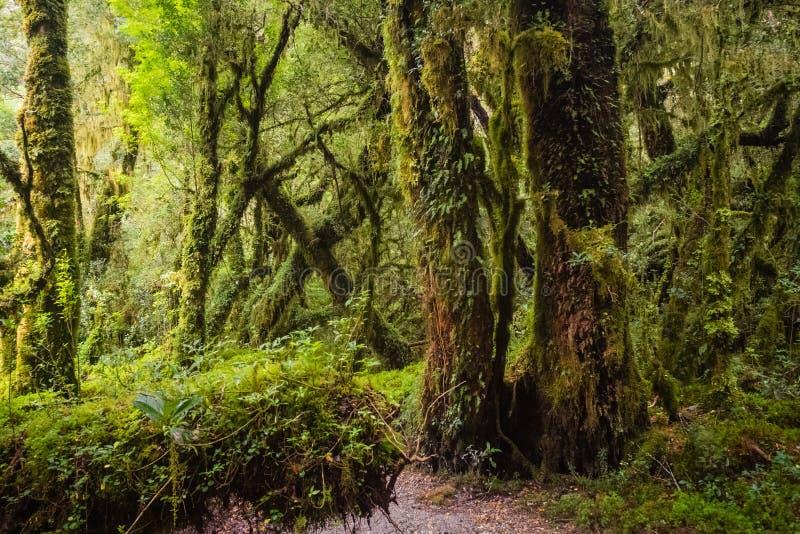 Detail des verzauberten Waldes im carretera austral, Bosque-enca stockfotos