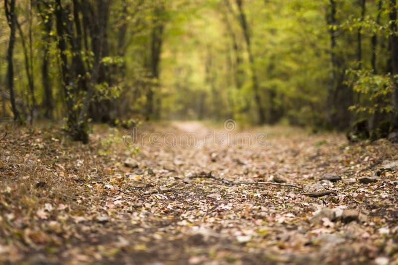 Detail des Weges im Herbstwald stockfotografie