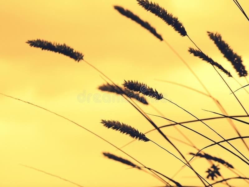 Detail die van gras het voorhoofd fronsen royalty-vrije stock afbeeldingen