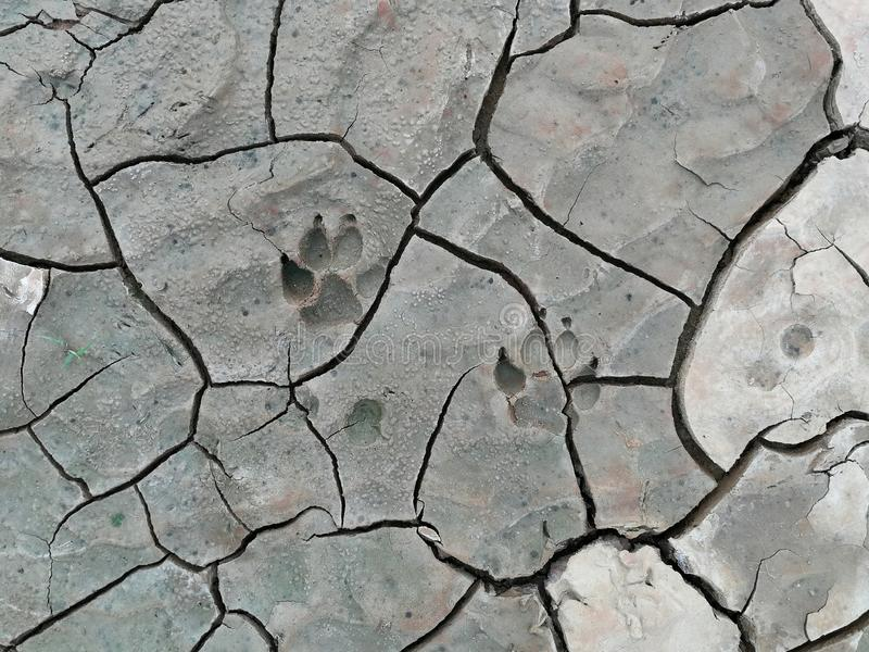 Dog foot print on cracked soil royalty free stock image