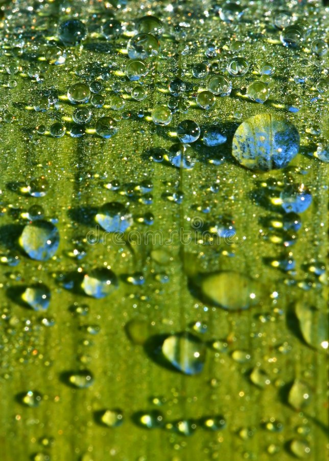 Free Detail Droplets On Leaf Of Plant Royalty Free Stock Photo - 5244965