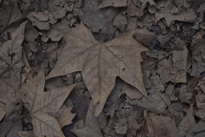 Detail of dry foliage on the ground. stock photos