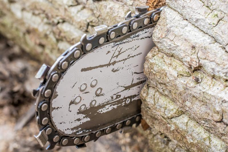 Detail einer Kettensäge, wenn ein Baumstamm gesägt wird lizenzfreie stockfotografie