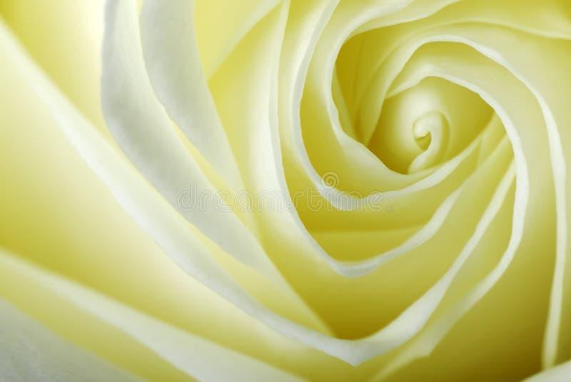 Detail einer Rose stockbilder