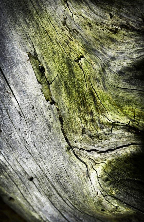 Detail eines alten Stumpfs überwältigt mit Moos lizenzfreies stockfoto