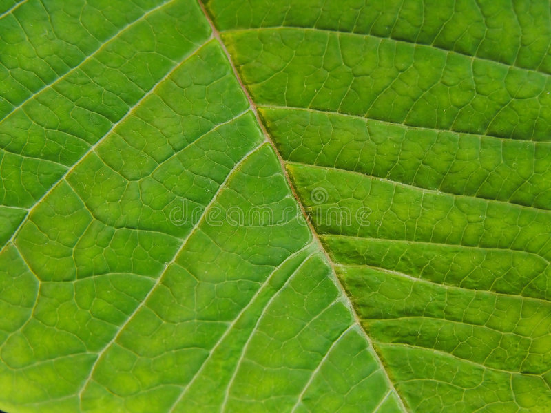 Detail eines Blattes stockfoto