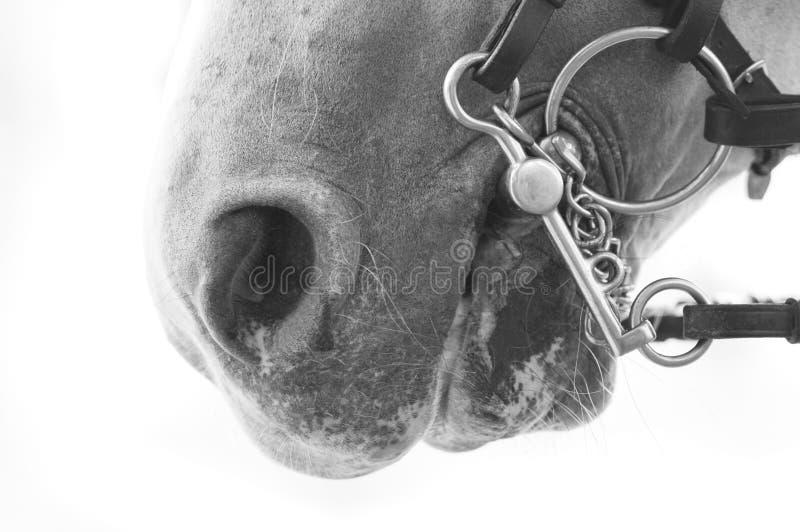 Detail eines Pferdmunds stockbilder