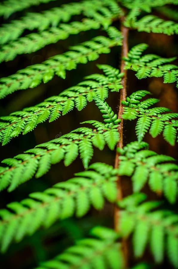 Detail eines schönen Blattes der Farnnahaufnahme lizenzfreie stockfotos