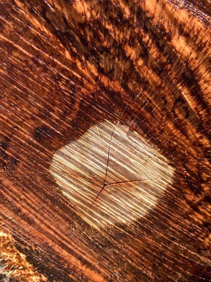 Detail eines Schnittbaums stockfoto