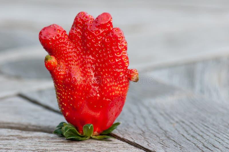 Closeup of an extraordinary shaped strawberry. Detail of an extraordinary shaped strawberry stock photo
