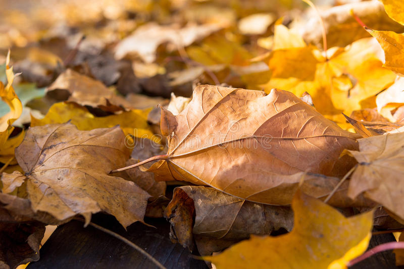 Detail Of Fallen Colorful Leaves On Grass In A Sunny Day In The Fall royalty free stock photos