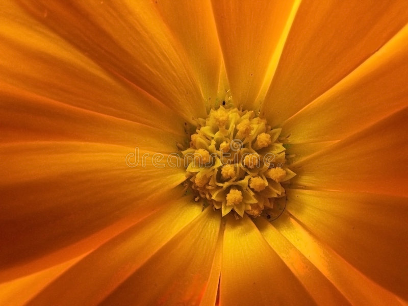 Download Detail of a flower stock photo. Image of flower, flowers - 4954442