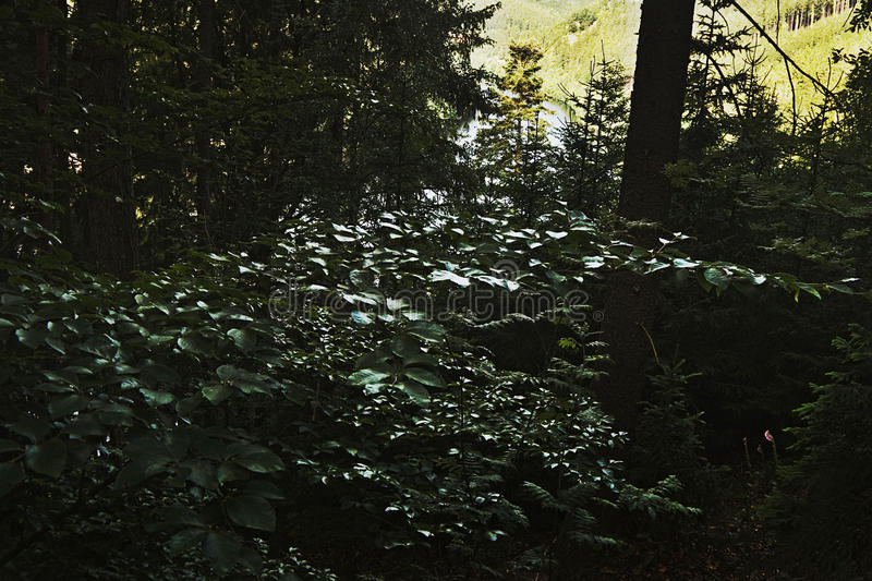 Detail of forest over the dam Brezova in czech nature in summer royalty free stock photography