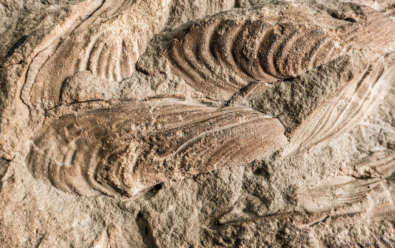 Detail of fossils. Close up view royalty free stock image