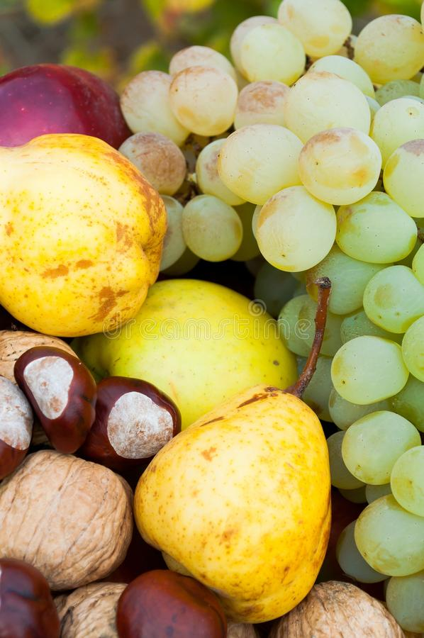 Detail of fresh colorful autumn fruits stock image