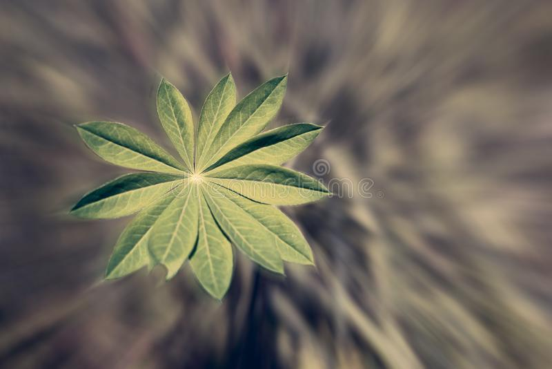 Detail of a fresh, vibrant plant with green leafs infront of a radial, blurred background with text space. Concept of environment, sustainability stock images