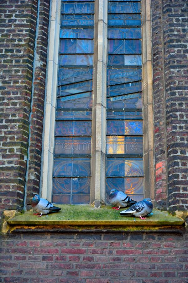 Detail of a glass stained church window. And three pigeons royalty free stock photos