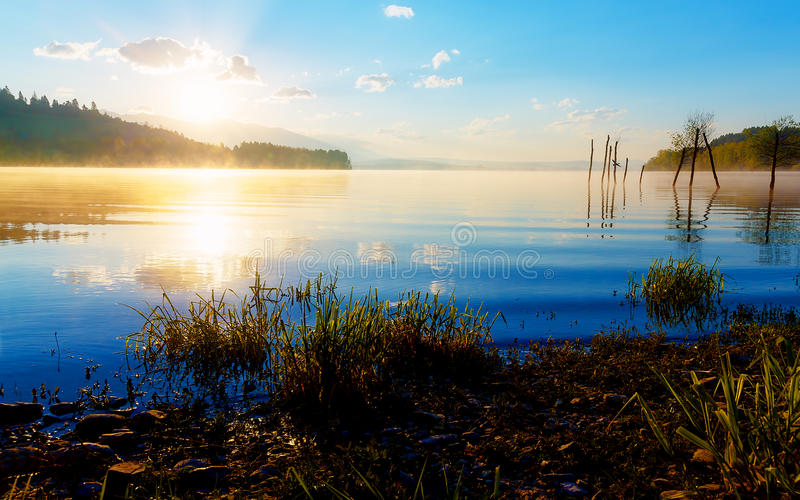 Detail of grass halm at a lake in magical morning time with dawning sun. Trees as leftovers of a mole. stock image
