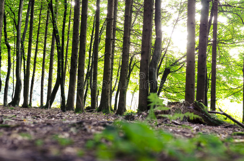 Download Detail of green forest stock photo. Image of plant, serenity - 32897730