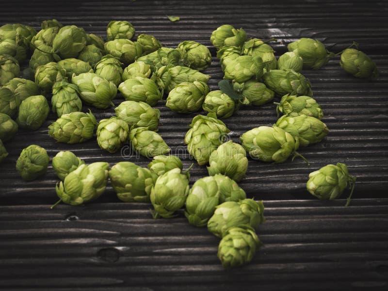 Detail of hop cones, SAAZ HOPS stock photo