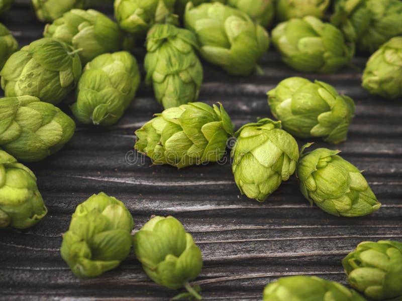 Detail of hop cones, SAAZ HOPS stock photography